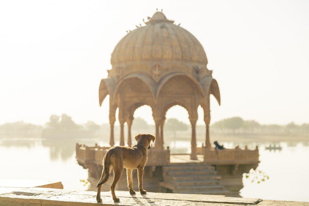 איך מוציאים ויזה להודו  עידן בן אור