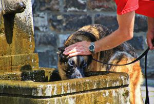 רצועות לכלבים - איך בוחרים את הרצועה המתאימה ביותר