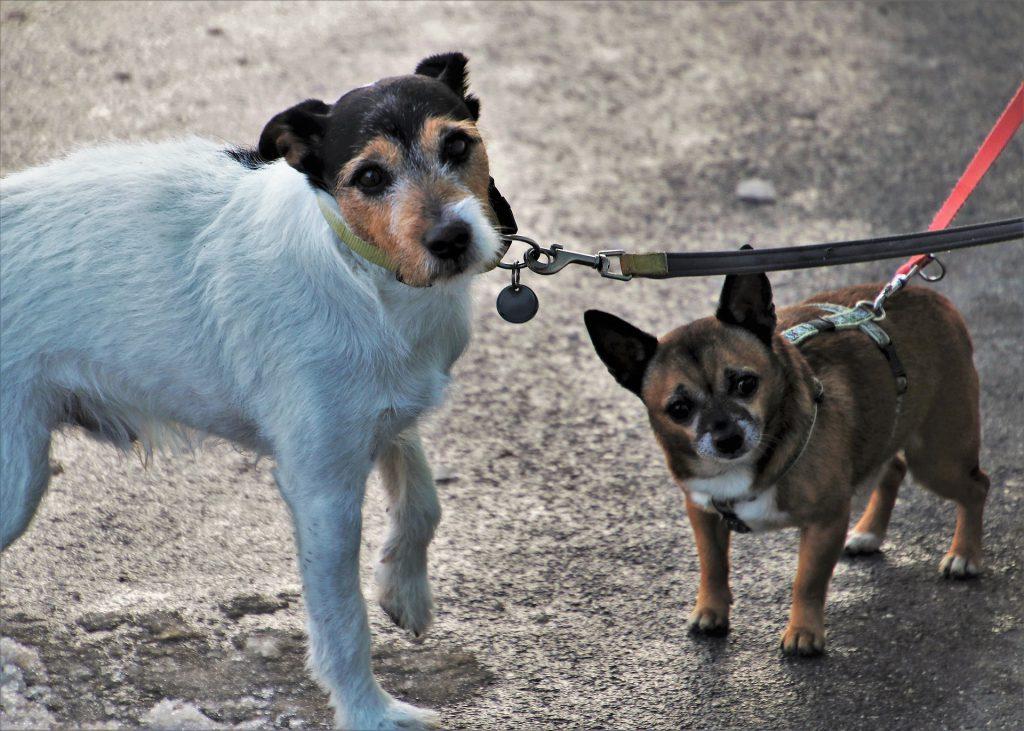 רצועות לכלבים איך בוחרים את הרצועה המתאימה ביותר